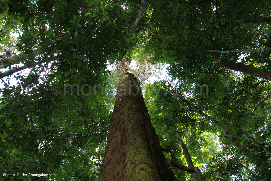Rainforest in Sumatra