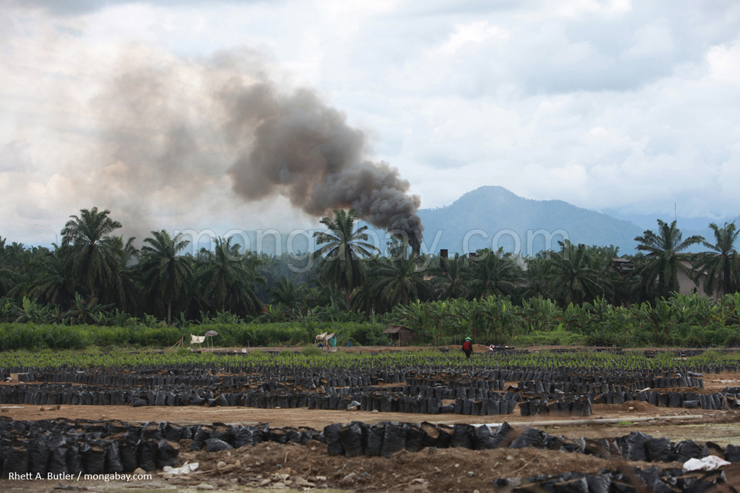 Palm oil mill in Sumatra