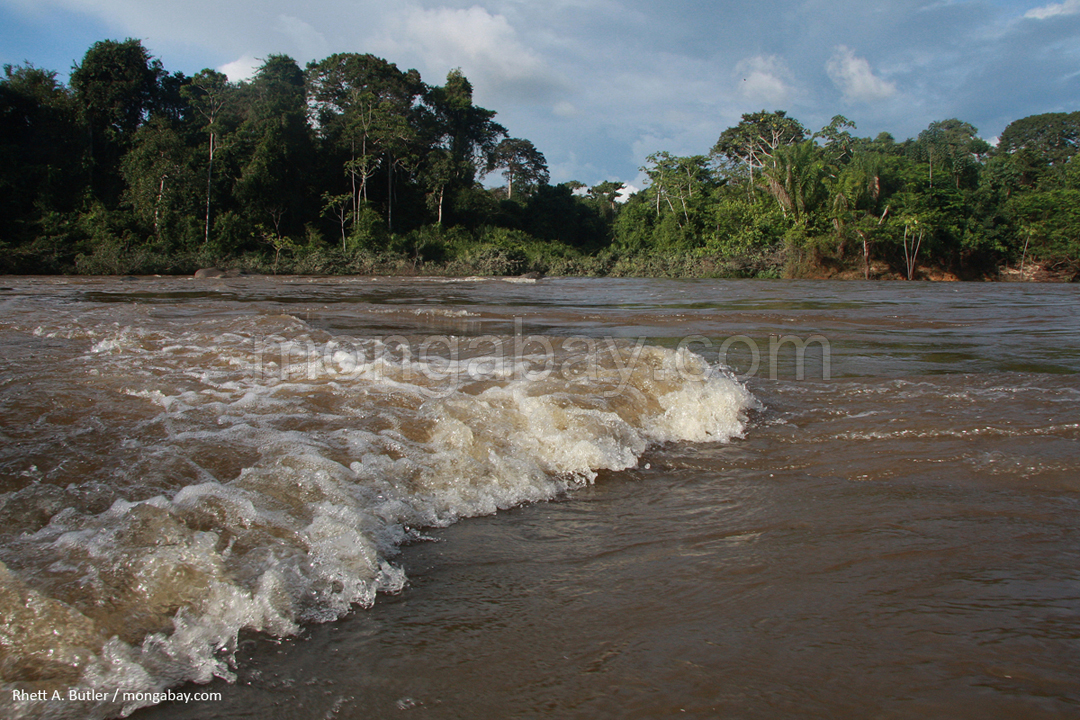 Regenwaldfluss in Surinam