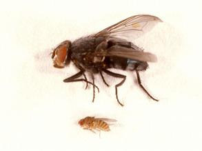 Fantastic Flies