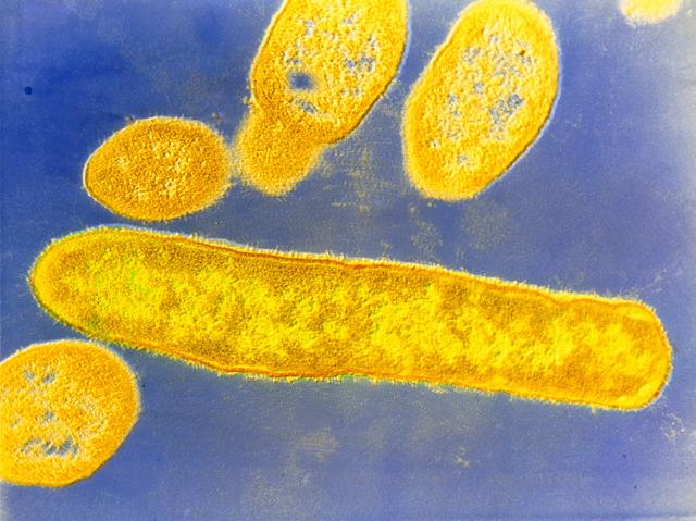 Medicinal Microbes