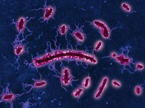 Tackling Typhoid