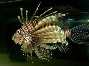 Spiny Stinger