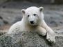 Knut Alone