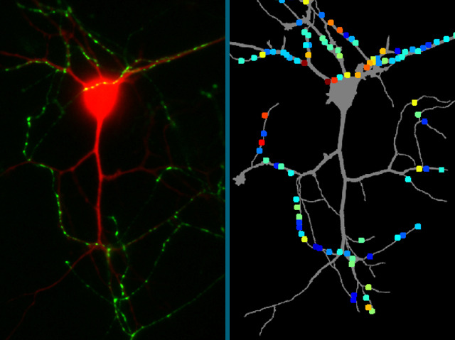 Signals and Synapses