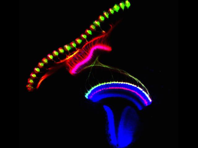 Rainbow Brain Rows