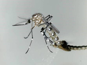 Hiding Dengue