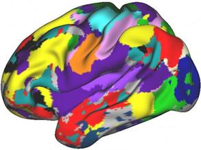 Navigating the Brain