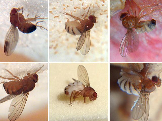 Zombie Flies