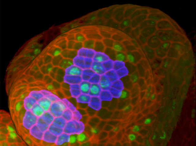 Regulating Cell Size