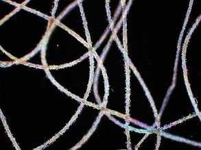 Weaving Artificial Organs