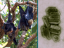 Virus-Hosting Bats