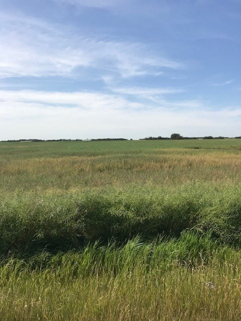 FEATURED LISTING: RR 261 TWP RD 554 Rural Sturgeon County