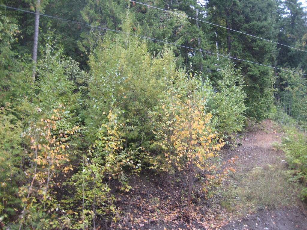 Main Photo: 12 Vickers Trail in Anglemont: Land Only for sale : MLS® # 10055802