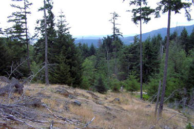 Main Photo: Lot 3 Sarah Way: Land Only for sale (Saltspring Island)  : MLS® # n/a