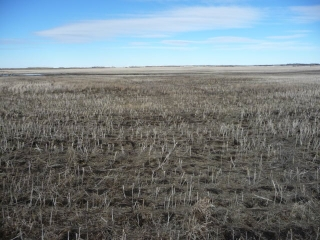 Main Photo: Twp 522 RR 144 County of Minburn: Rural Minburn County Rural Land/Vacant Lot for sale : MLS® # E4069005