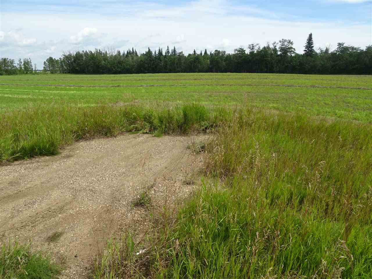 Main Photo: Hwy 28 RR 210: Rural Thorhild County Rural Land/Vacant Lot for sale : MLS® # E4092749