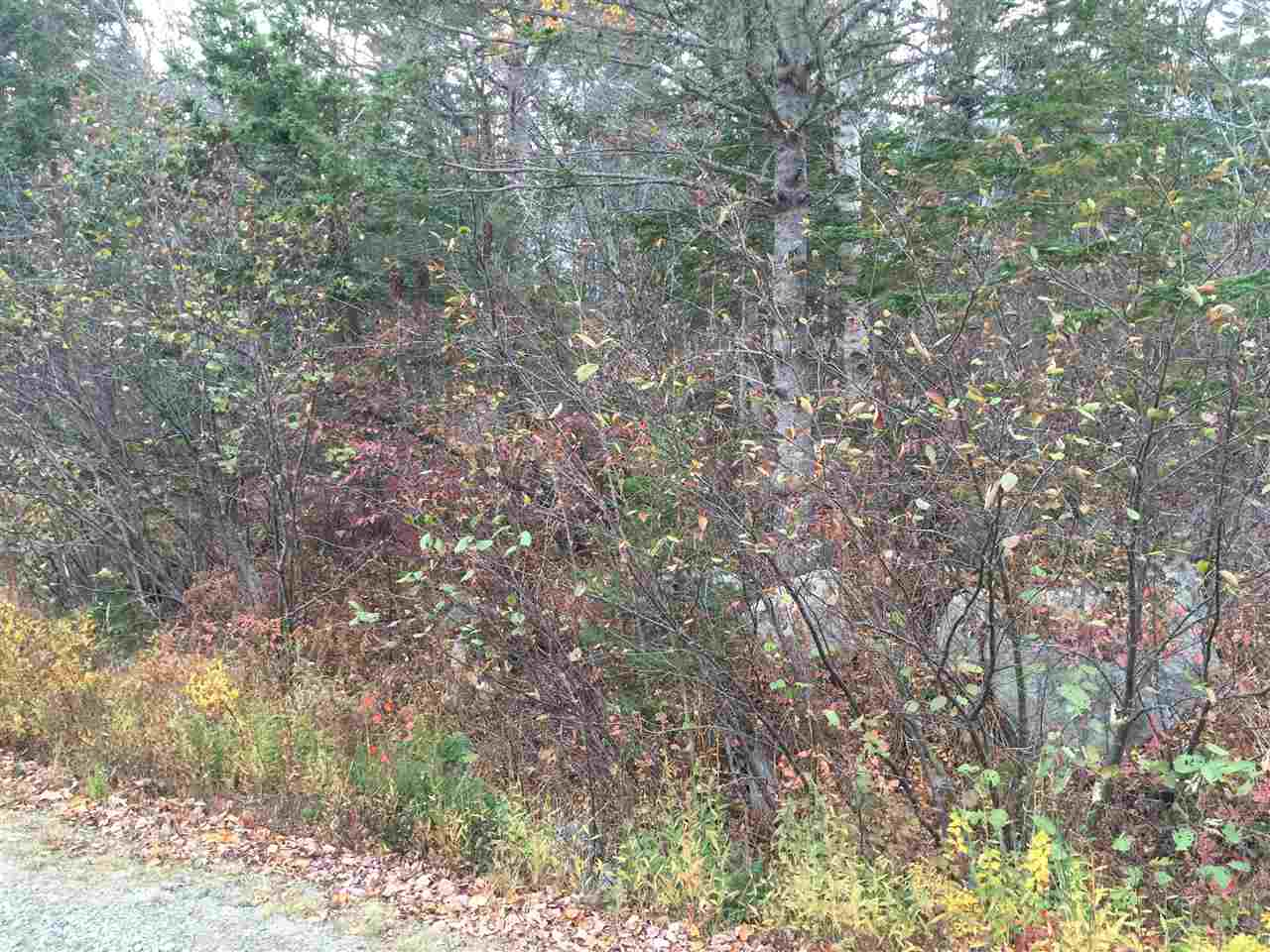 Photo 3: Photos: Lot 4 Beech Hill Road in Hunt's Point: 406-Queens County Vacant Land for sale (South Shore)  : MLS®# 201728019