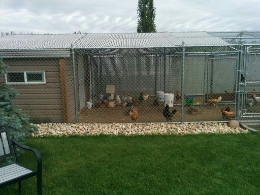 2 spotless used Chicken coops