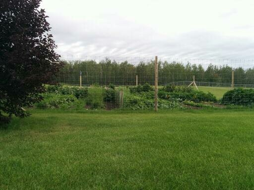 Beautiful Kitchen Garden with 3 ft of excellent soil. This garden has 27 raspberry bushes on the side of the fence.
