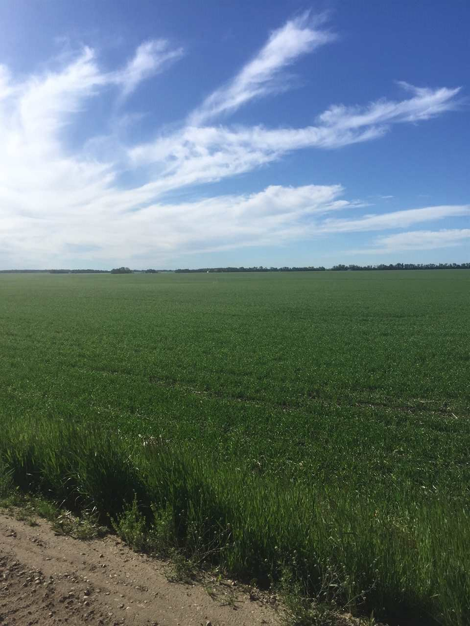 Main Photo: RR261 TWP 570 Road: Rural Sturgeon County Rural Land/Vacant Lot for sale : MLS(r) # E4047242