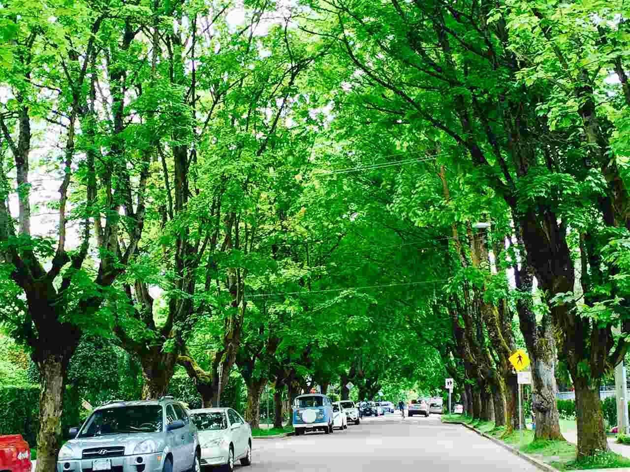 One of the most beautiful street in Vancouver. Heather St...