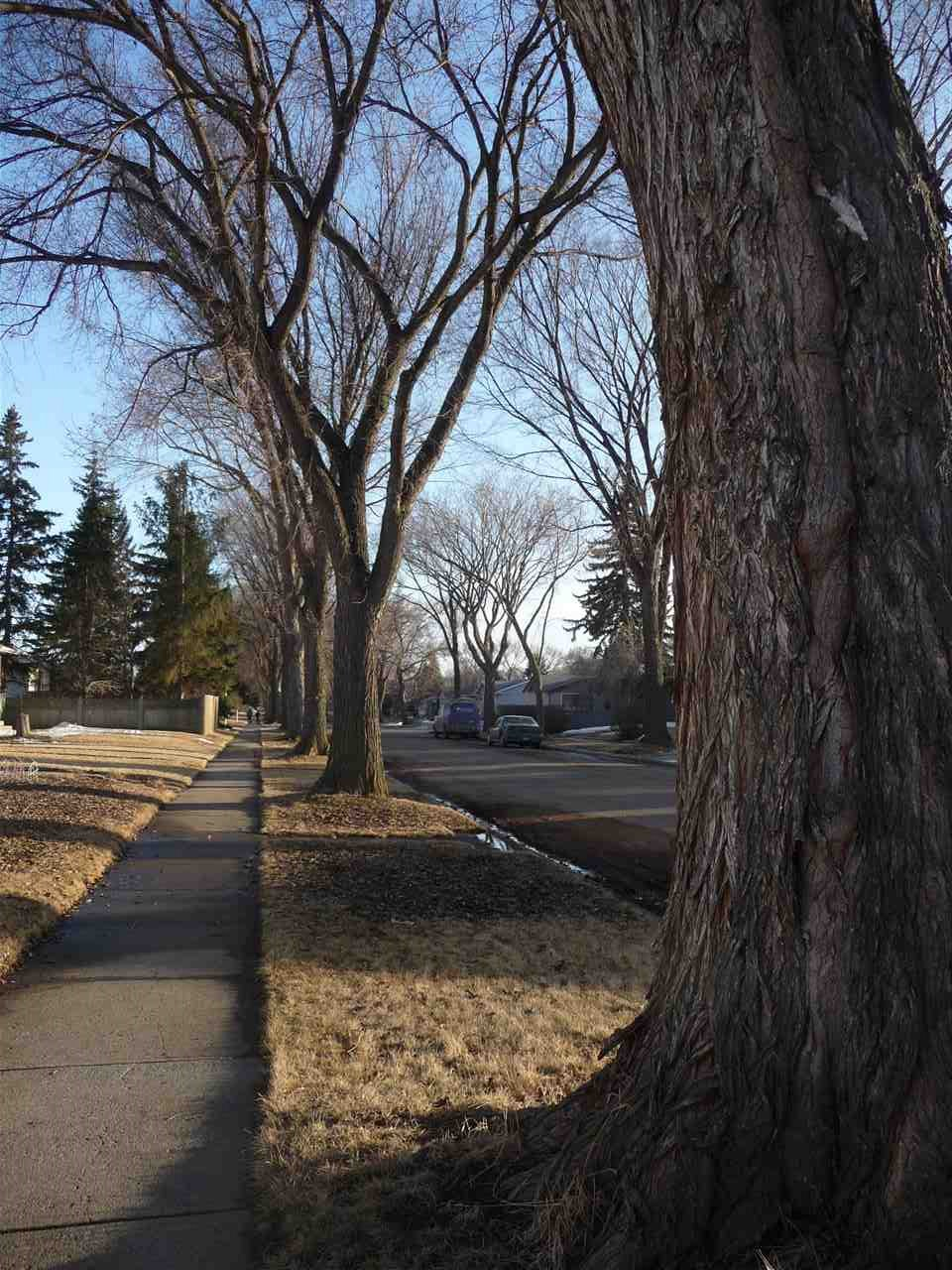 mature trees on boulevard