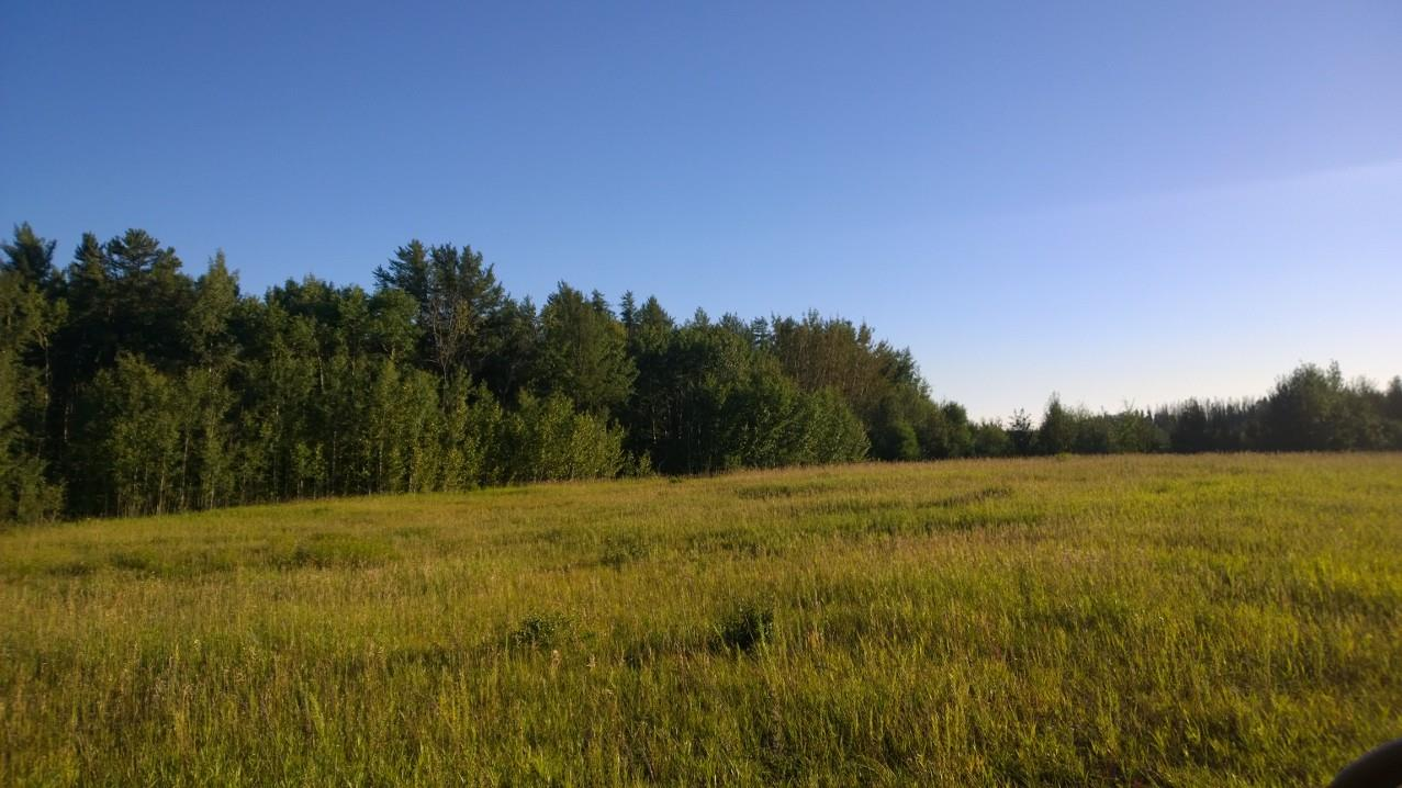 Main Photo: 51227 RGE RD 270 Road: Rural Parkland County Rural Land/Vacant Lot for sale : MLS® # E4078211