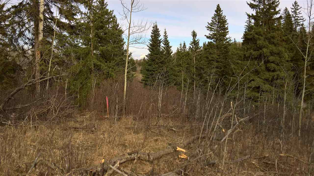 Photo 14: 51109 RGE RD 261 Road: Rural Parkland County Rural Land/Vacant Lot for sale : MLS(r) # E4061847