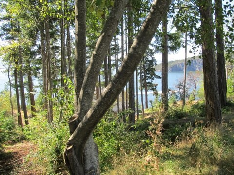 "Photo 3: Photos: LOT 74 ALLEN CRESCENT in Pender Harbour: Pender Harbour Egmont Home for sale in ""DANIEL POINT"" (Sunshine Coast)  : MLS® # R2091829"