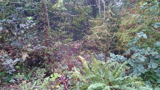Main Photo: LOT 25 DEERHORN Drive in Sechelt: Sechelt District Home for sale (Sunshine Coast)  : MLS(r) # R2120533