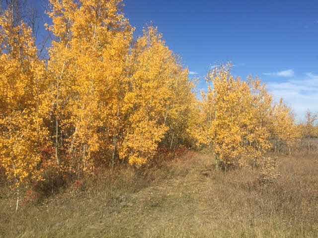 Main Photo: 36 56110 Rge Rd 13: Rural Lac Ste. Anne County Rural Land/Vacant Lot for sale : MLS® # E4037640