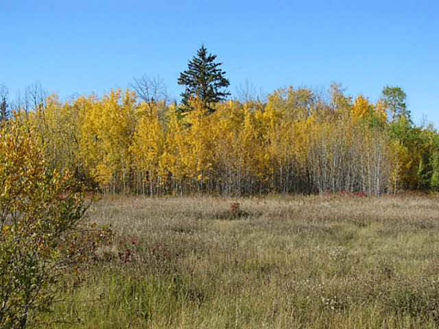 Photo 19: 36 56110 Rge Rd 13: Rural Lac Ste. Anne County Rural Land/Vacant Lot for sale : MLS® # E4037640