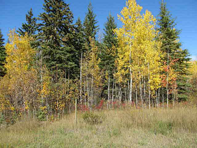 Photo 9: 36 56110 Rge Rd 13: Rural Lac Ste. Anne County Rural Land/Vacant Lot for sale : MLS® # E4037640