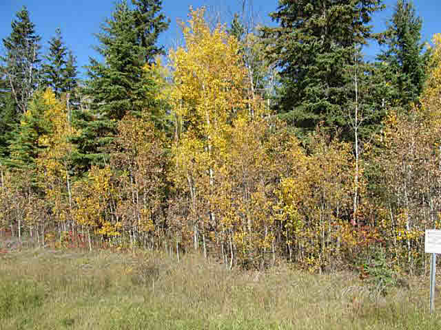 Photo 11: 36 56110 Rge Rd 13: Rural Lac Ste. Anne County Rural Land/Vacant Lot for sale : MLS® # E4037640