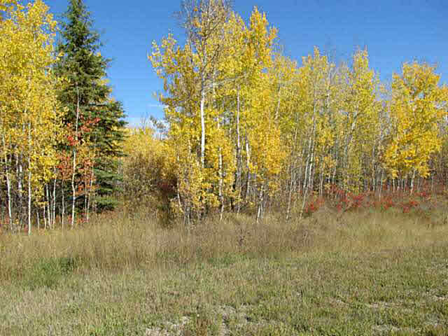 Photo 8: 36 56110 Rge Rd 13: Rural Lac Ste. Anne County Rural Land/Vacant Lot for sale : MLS® # E4037640