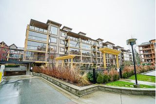 "Main Photo: 556 8258 207A Street in Langley: Willoughby Heights Condo for sale in ""Yorkson Creek"" : MLS® # R2241331"
