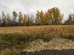 Main Photo: 7312 TWP RD 514 Road: Rural Parkland County Rural Land/Vacant Lot for sale : MLS(r) # E4044964