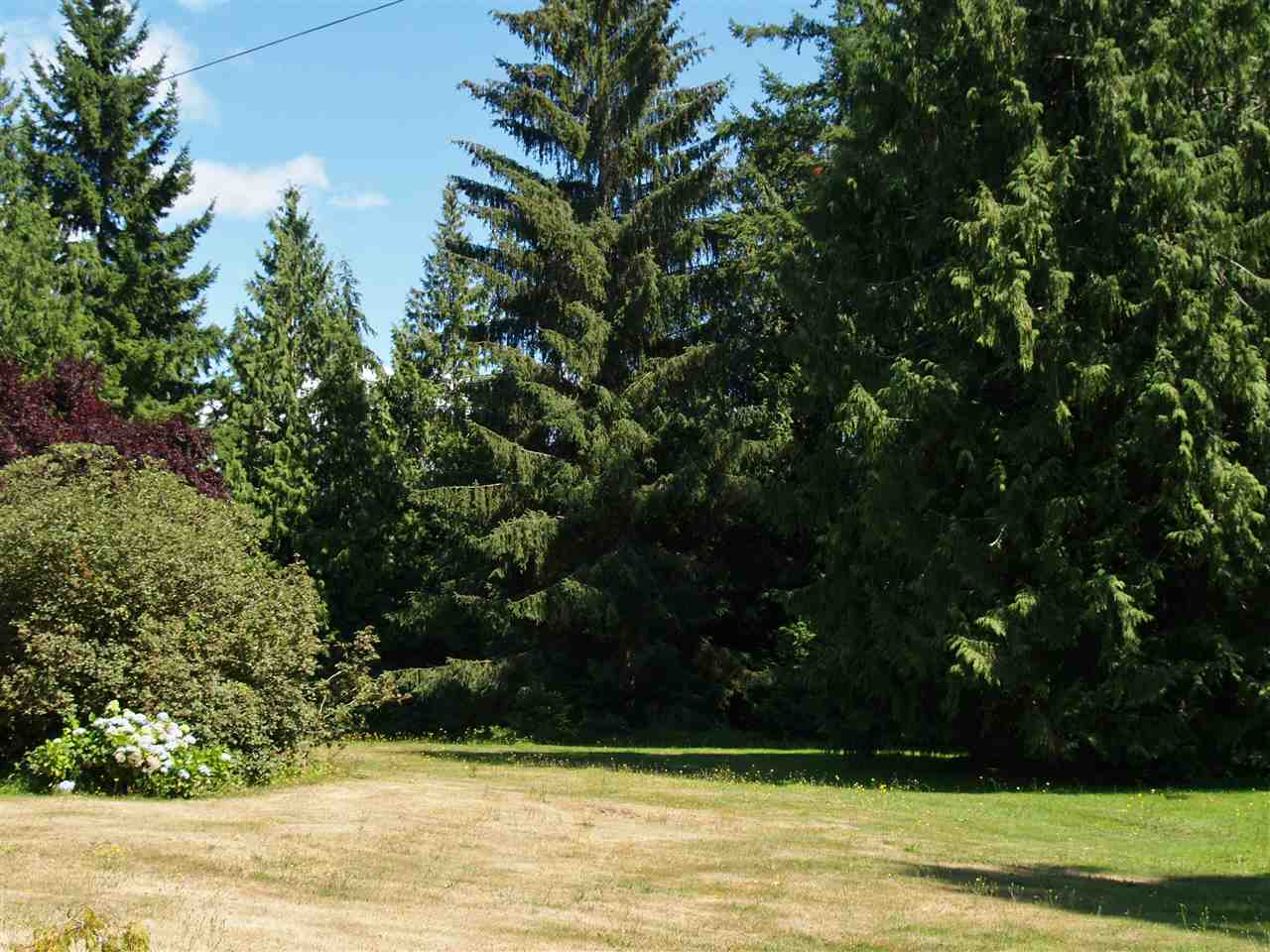 This property offers many options with its many cleared areas. As well you can get shade from the perimeter trees and those on the back half of the property.