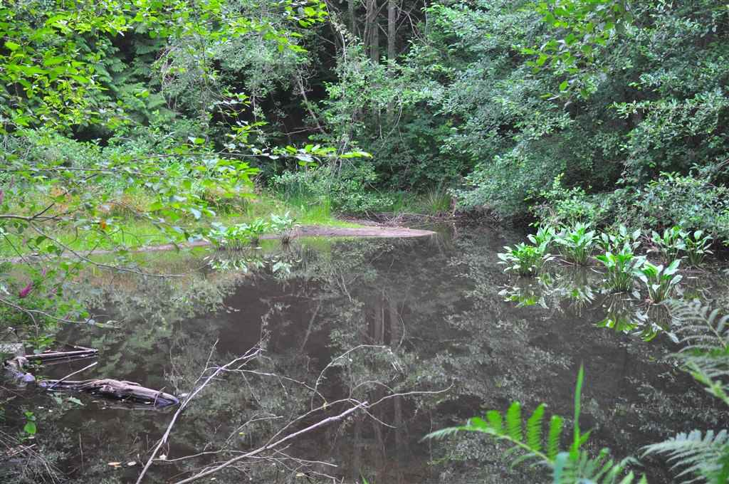 The seasonal creek flows into a pond area to bring more wildlife to this lovely property