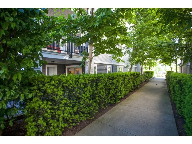 Photo 4: D110 8929 202 Street in Langley: Walnut Grove Condo for sale : MLS® # R2194862