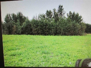 Main Photo: Lot4 Blk 1 North Pigeon Lake Estates: Rural Wetaskiwin County Rural Land/Vacant Lot for sale : MLS(r) # E4058590