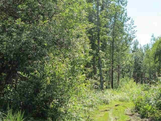 Main Photo: North of TWP 602 on Rg Rd 231 (Clearbrook Rd): Rural Thorhild County Rural Land/Vacant Lot for sale : MLS(r) # E4072834