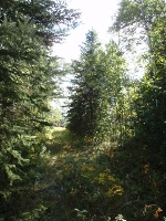 Main Photo: RR 211 & Twp Rd 652A: Rural Athabasca County Rural Land/Vacant Lot for sale : MLS® # E4057063