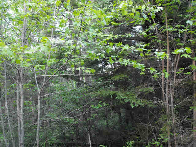 Photo 4: Photos: Lot 1 CHESTNUT Road in West Dublin: 405-Lunenburg County Vacant Land for sale (South Shore)  : MLS® # 201611199