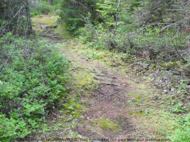 Photo 3: Photos: Lot 1 CHESTNUT Road in West Dublin: 405-Lunenburg County Vacant Land for sale (South Shore)  : MLS® # 201611199