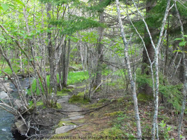 Photo 2: Photos: Lot 1 CHESTNUT Road in West Dublin: 405-Lunenburg County Vacant Land for sale (South Shore)  : MLS® # 201611199
