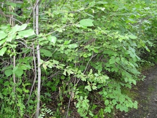 Main Photo: 213 4224 Twp Rd 545: Rural Lac Ste. Anne County Rural Land/Vacant Lot for sale : MLS® # E4076974