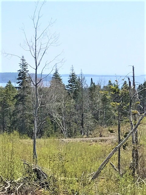 Photo 9: Photos: 3 Lots Highway 331 in Dublin Shore: 405-Lunenburg County Vacant Land for sale (South Shore)  : MLS®# 201712817