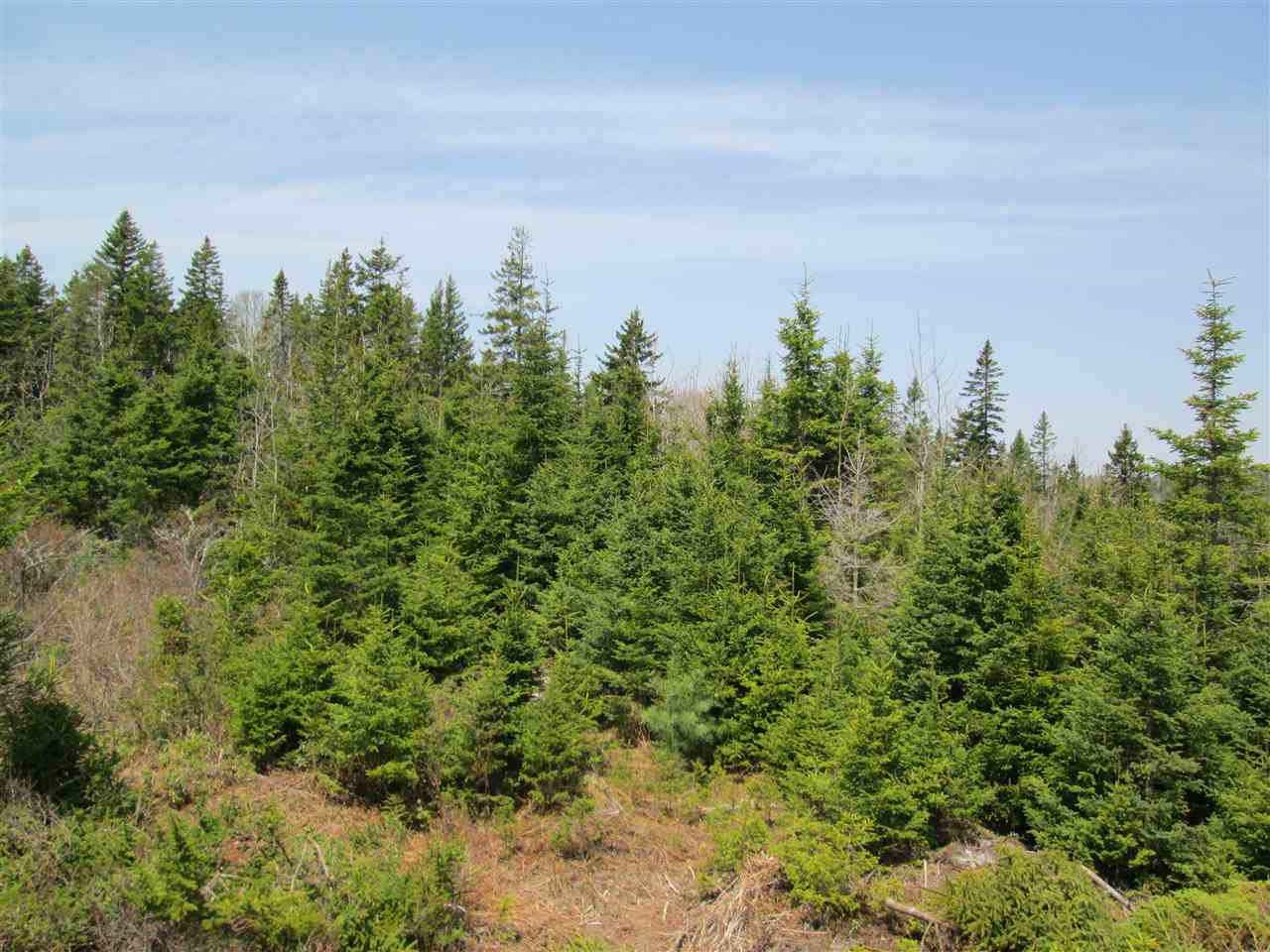 Photo 6: Photos: 3 Lots Highway 331 in Dublin Shore: 405-Lunenburg County Vacant Land for sale (South Shore)  : MLS®# 201712817